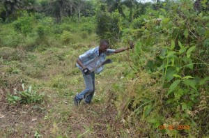 clearing_land